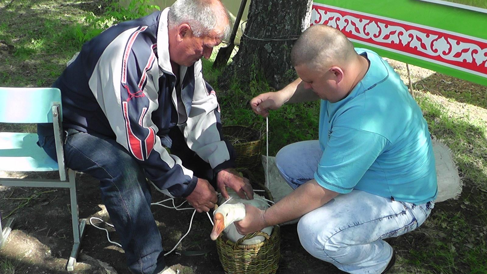 Sabantuy-2016-obzornye-foto-630-Bastanovo