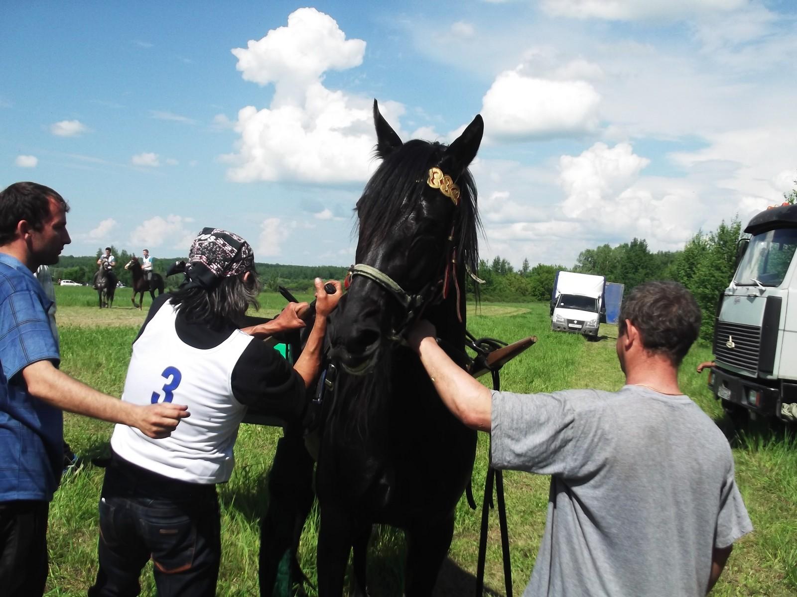 Sabantuy-2016-Skachki-i-bega-106-Bastanovo