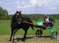 Sabantuy-2016-Skachki-i-bega-094-Bastanovo